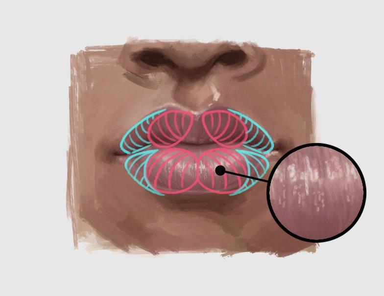 lip texturing procreate illustration