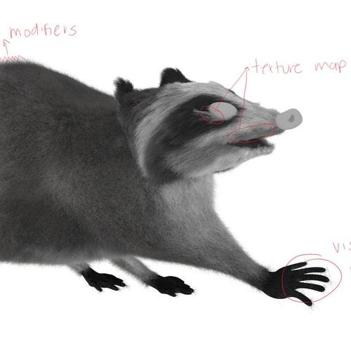 raccoon texturing 3d