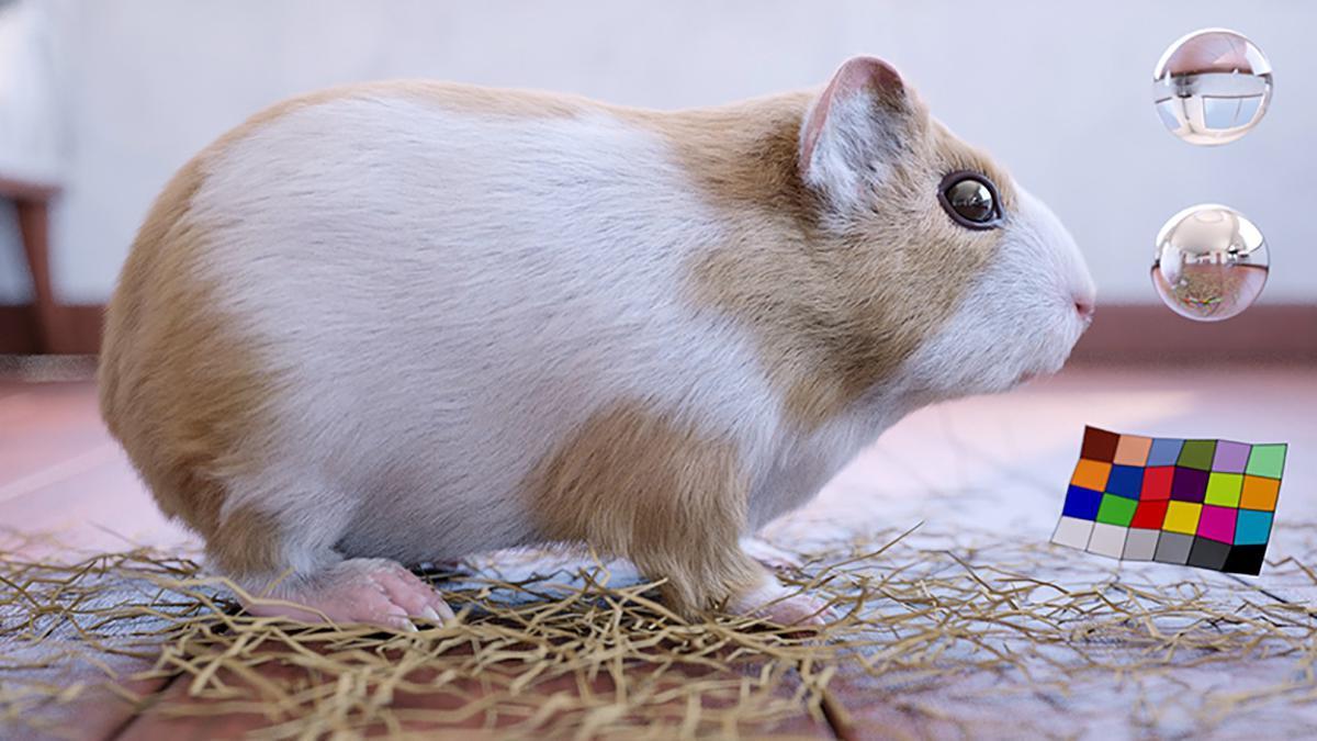 animal character hamster 3d model