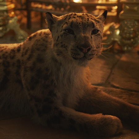 his dark materials leopard cgi