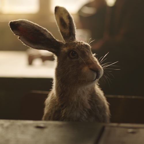 his dark materials bunny cgi