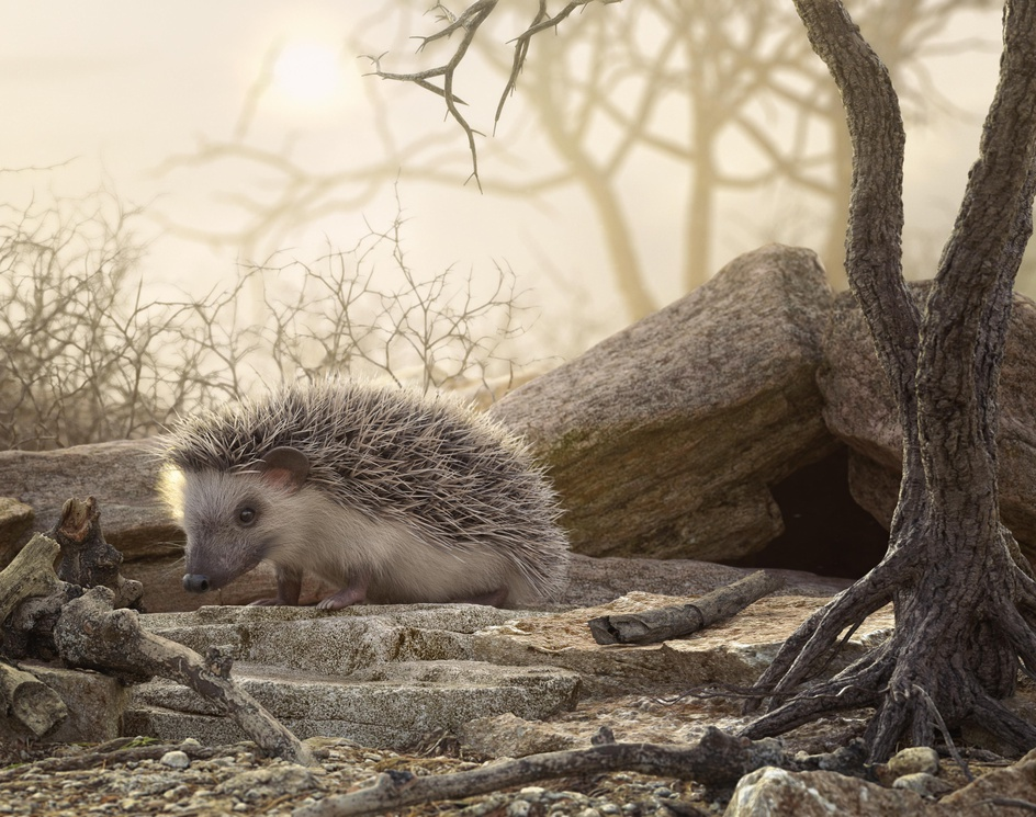 Hedgehogby Martin Quijada
