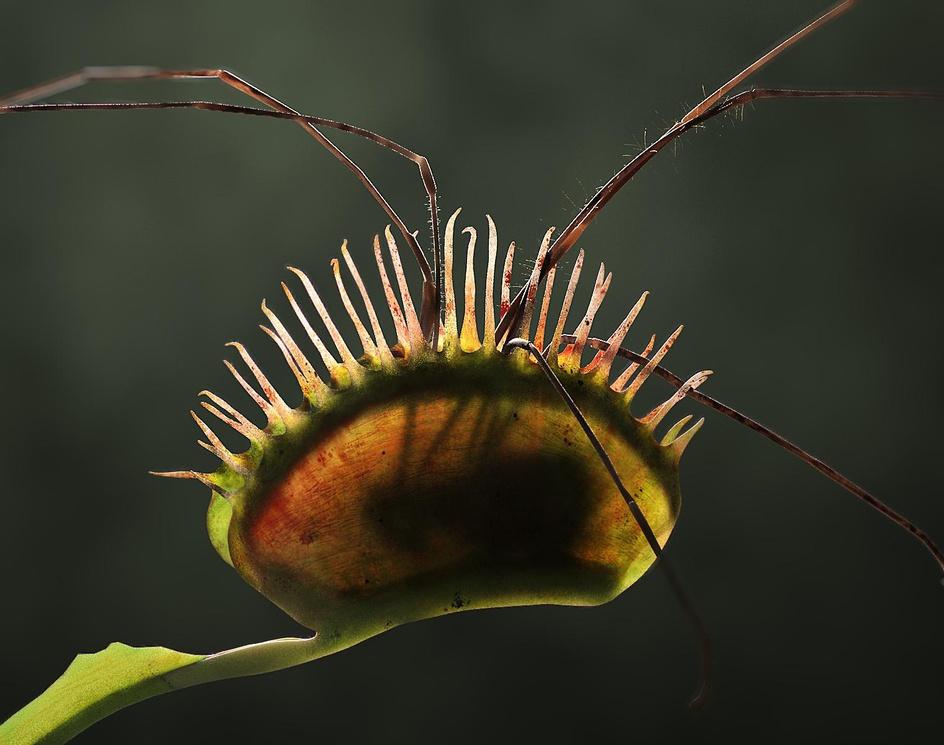 Carnivorous plantby hleandre