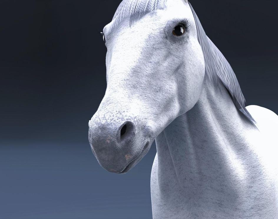 arabian horseby Baker awad