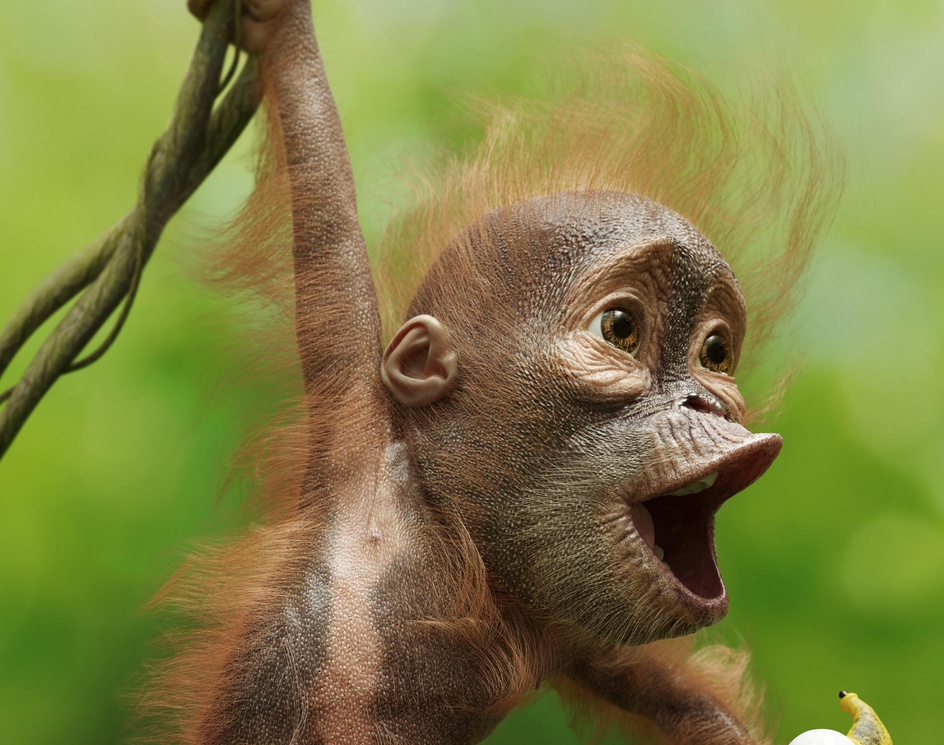 Little Monkeyby igor_catto