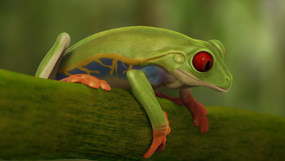 3d rendered frog imagery