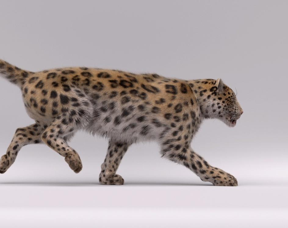 Leopardby Julie Bijjou
