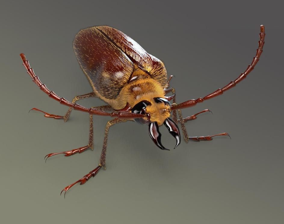 Acanthinodera cummingiby Rene Olivares