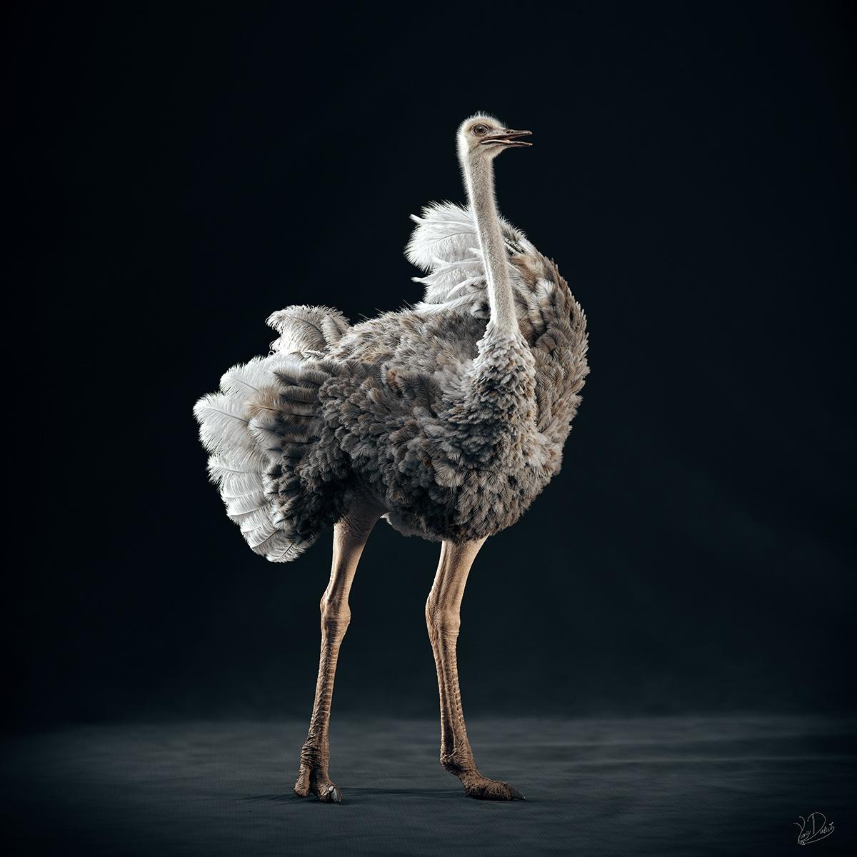 modeling a Somali ostrich
