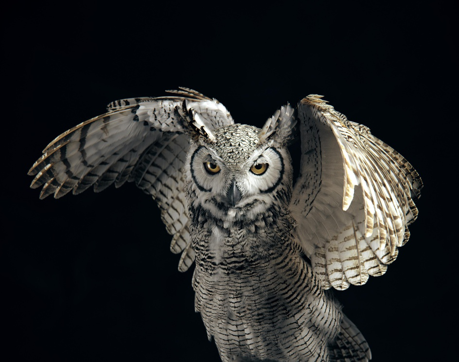 Subarctic Great Horned Owlby Yuriy Dulich