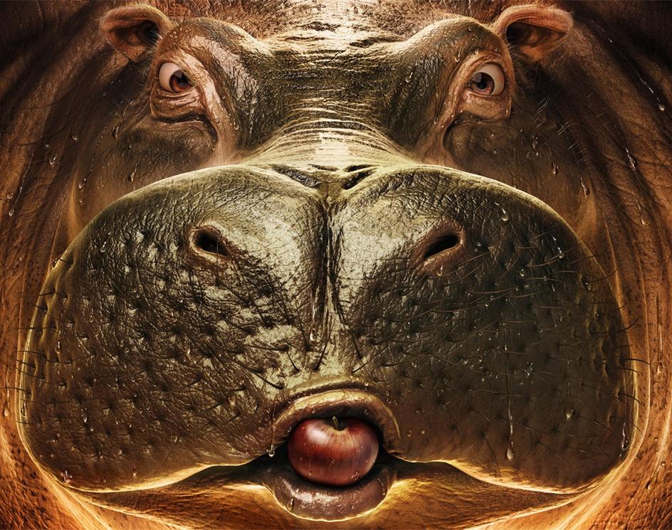 Hippoby pedroconti