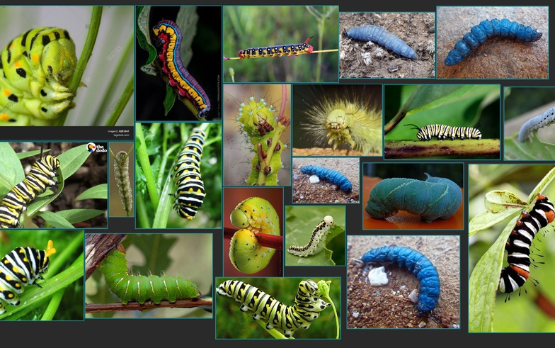 imagery referencing research project caterpillar