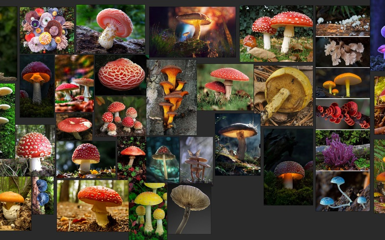imagery referencing research project starting mushrooms