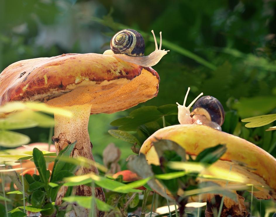 Snail Helloby Rémy Trappier