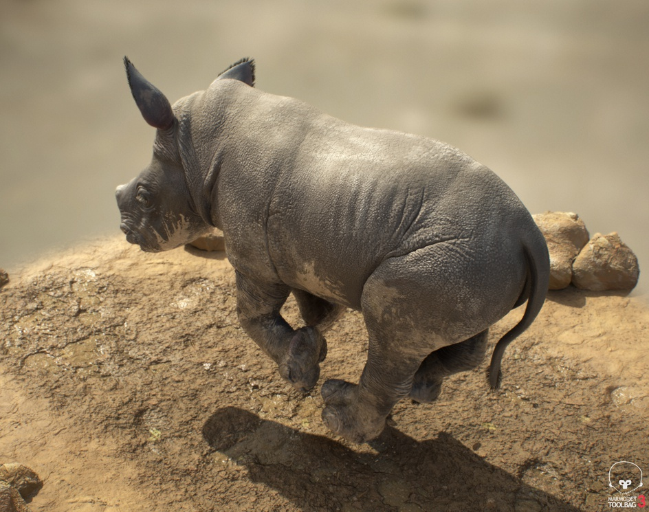 Little Muddy Rhinoby Ladislav Kovac