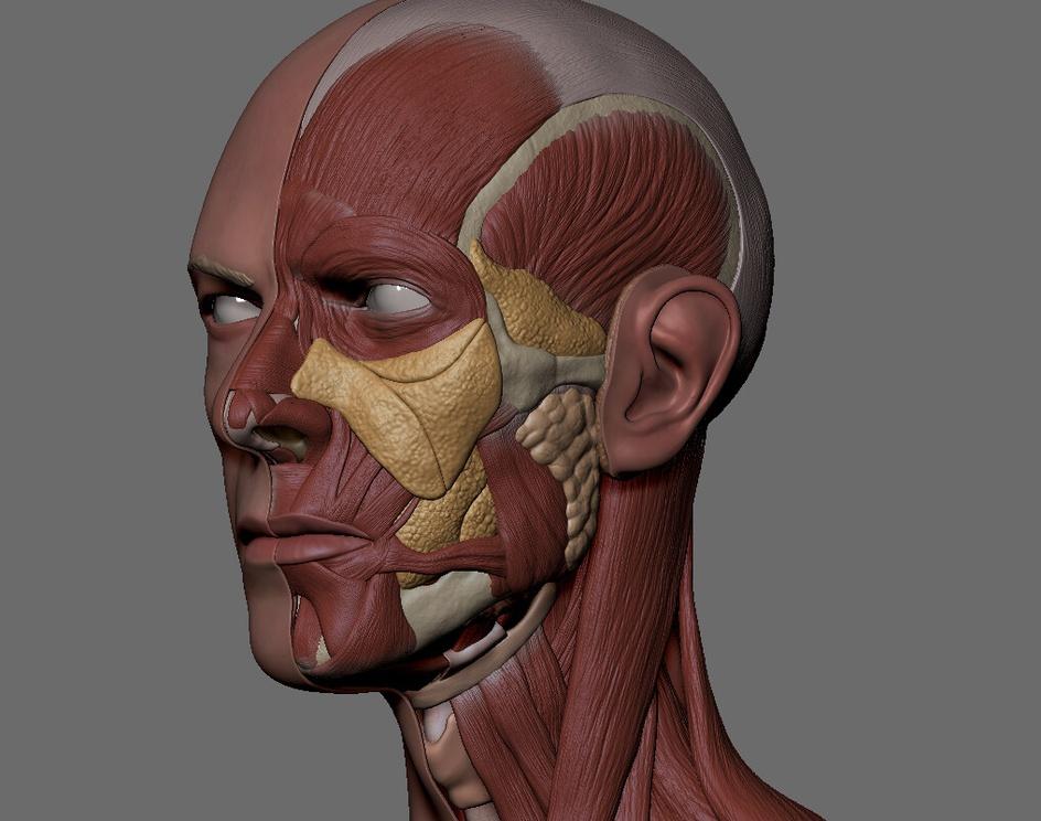 David Bowie - Anatomy Faceby RodrigoAvila