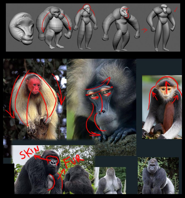 shapes impression practical research monkeys anatomy form