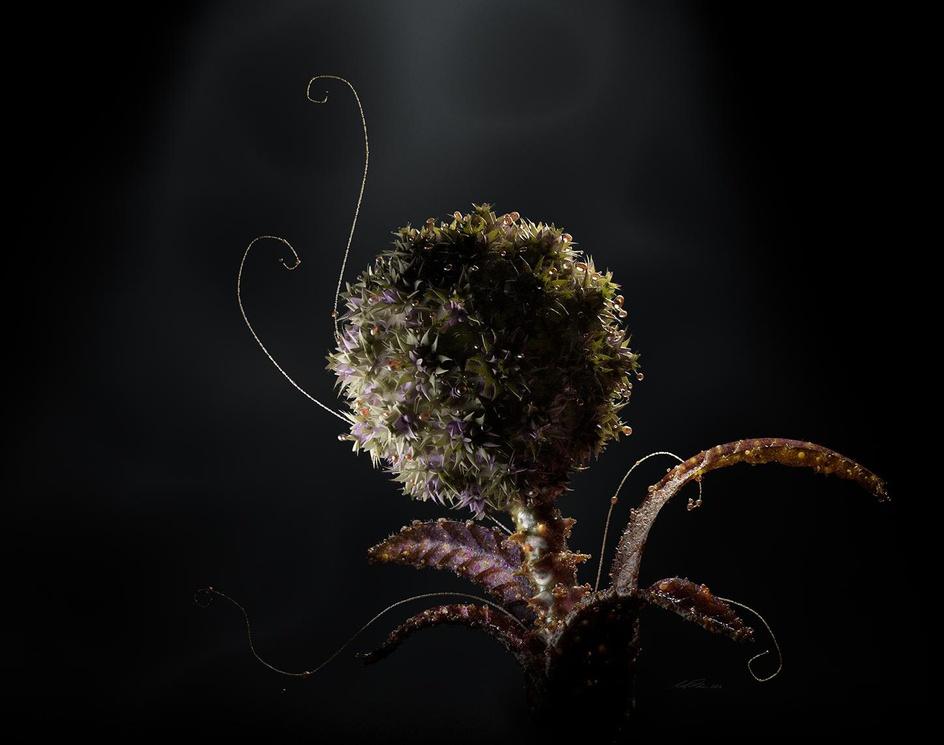 Species IIby stevebarrett