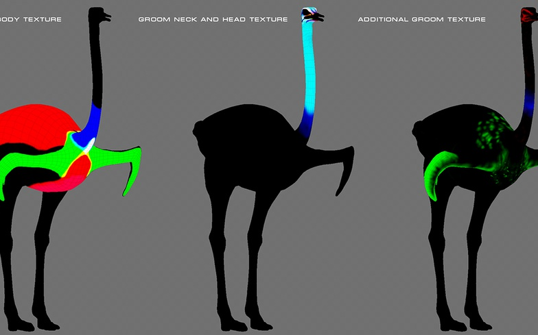 Texturing maps of a Somali ostrich