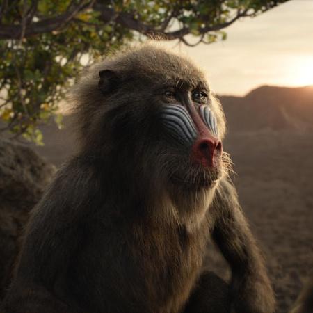 the lion king rafiki mandrill monkey