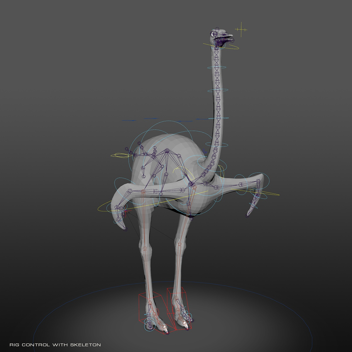 rig control skeleton of a Somali ostrich