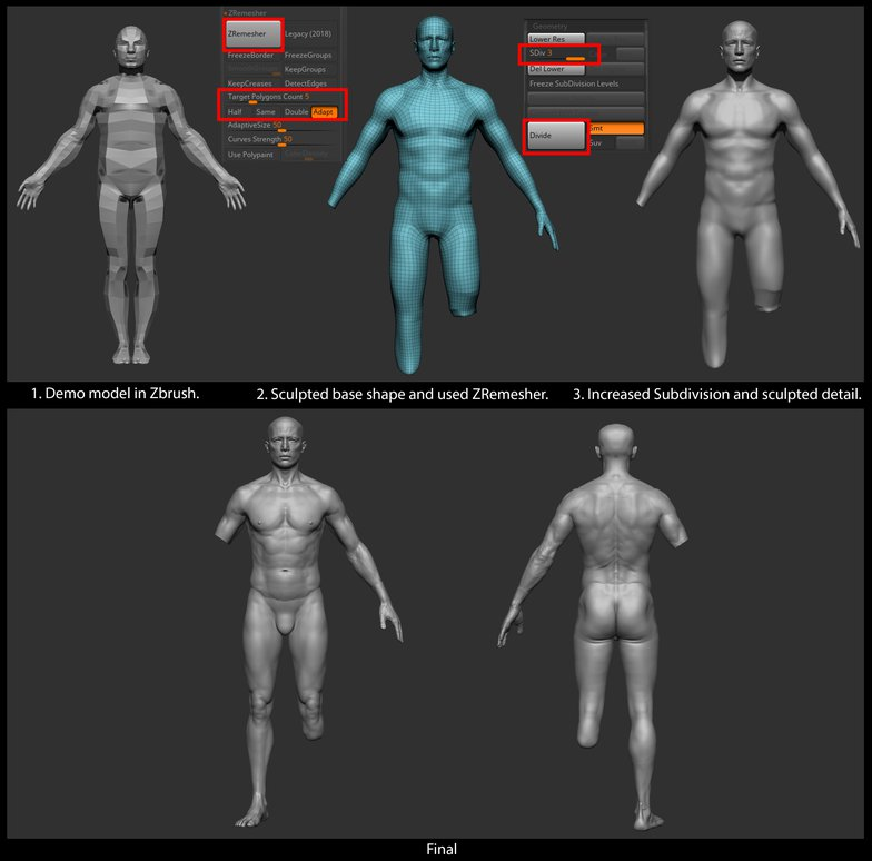 3d sculpt male anatomy