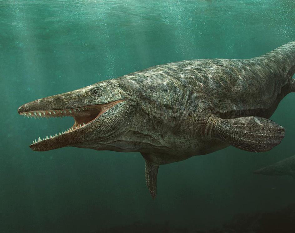 Marine reptilesby Vlad Konstantinov