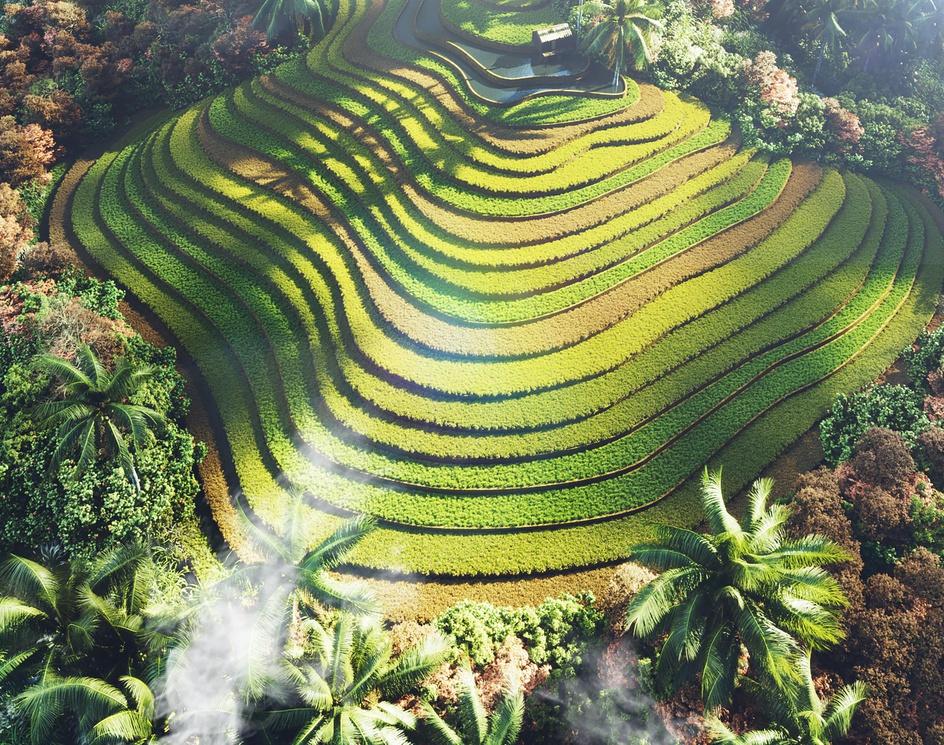 Rice Terraces Vietnamby vicnguyendesign