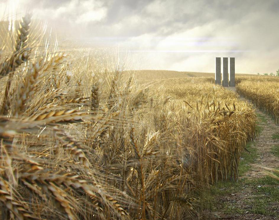 Wheat Field  - Videoby Theo