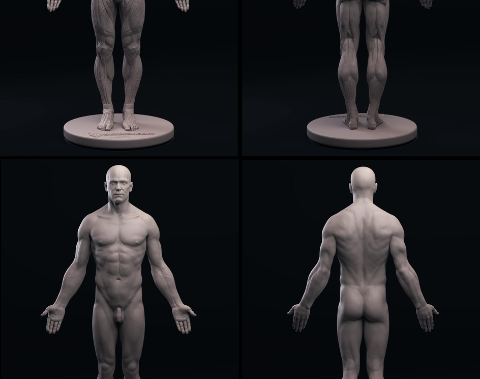 Full Ecorche and nude male anatomy modelsby 3dtotal staff